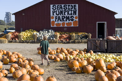Seaside pumpkin farms
