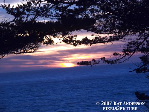 Cypress_sunset