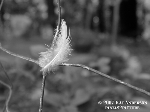 Feather_on_fence