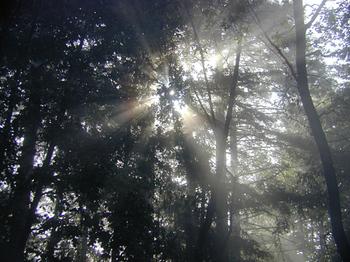 Sideyard_in_fog_5