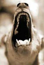 Barking_dog_2