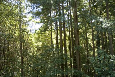 Treesinwoods