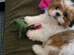 Webster_puppy_playpen