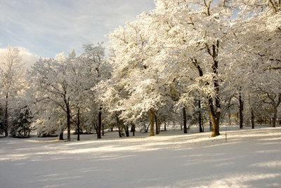 Snowscene4_2
